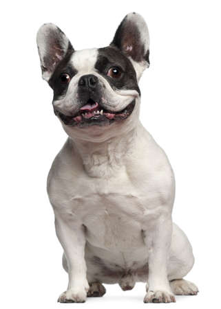 front teeth: French Bulldog, 5 years old, sitting in front of white background