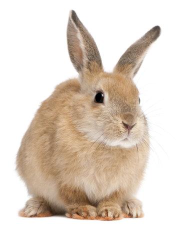 Konijntje konijn voor witte achtergrond Stockfoto