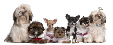 Group of dogs sitting in front of white background photo