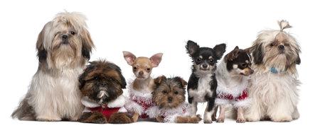 perros vestidos: Grupo de perros sentado frente a fondo blanco