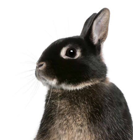 Close-up of rabbit in front of white background photo