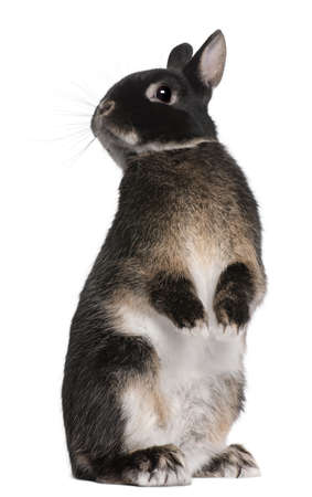 Rabbit standing on hind legs in front of white background Stock Photo - 8651418