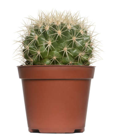 Cactus in front of white background photo