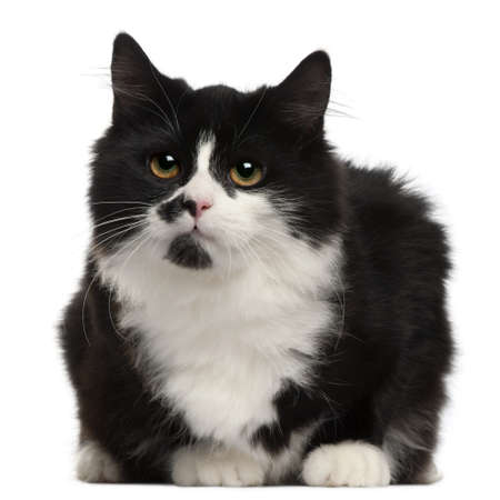 Black and white cat, 5 months old, sitting in front of white background photo