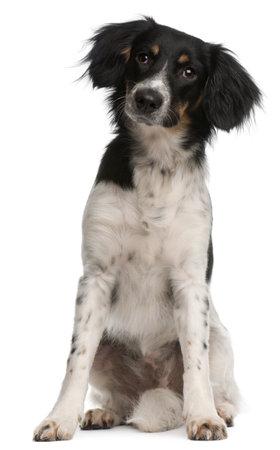 9 months old: Perro de raza mixta, 9 meses de edad, sentado frente a fondo blanco
