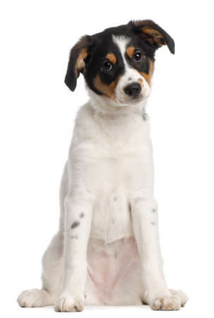 Mixed-breed puppy, 2 and a half months old, sitting in front of white background Stock Photo - 9191134
