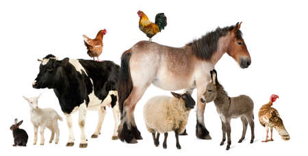 domestic animal: Variety of farm animals in front of white background