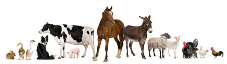 Variety of farm animals in front of white background