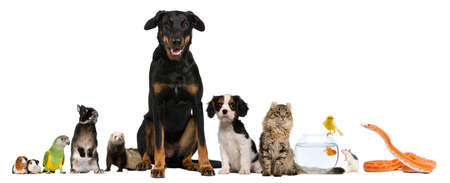 pet animal: Group of pets sitting in front of white background