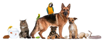 Group of pets sitting in front of white background photo