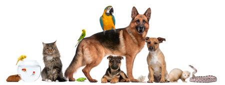 Grupo de mascotas sentado en frente de fondo blanco Foto de archivo