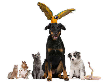 Portrait of group of pets in front of white background photo