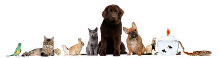 large group of animals: Group of pets sitting in front of white background