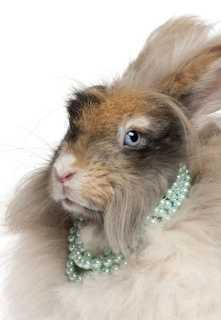 Close-up of English Angora rabbit wearing pearls in front of white background Stock Photo - 9564795