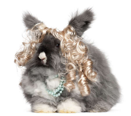 bunny rabbit: English Angora rabbit wearing wig and pearls in front of white background