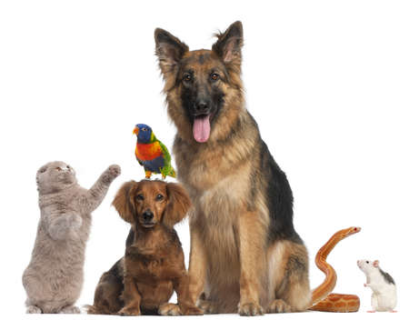 Group of animals in front of white background photo