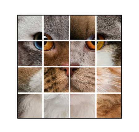Photo composition of a cats head made with various cats, in front of white background photo