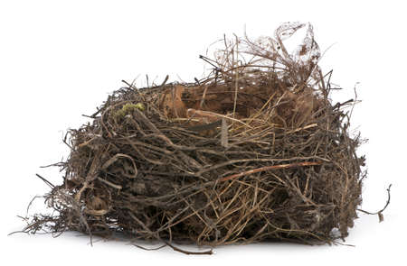 Focus stacking of a Nest of Common Blackbird in front of white background photo