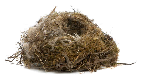 focus stacking: Focus stacking of a Nest of tit in front of white background