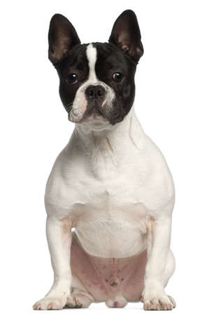 french bulldog: French Bulldog, 7 months old, sitting in front of white background