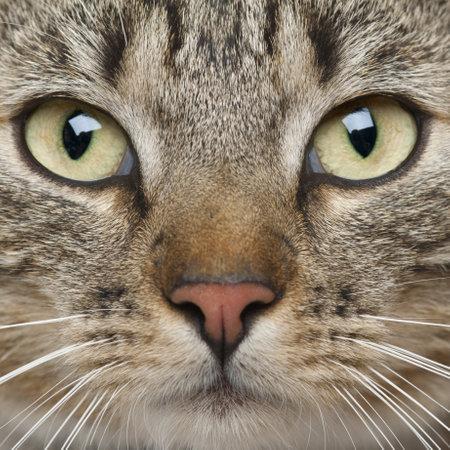 9 months old: Primer plano de gato Europeo de Pelo Corto, 9 meses de edad