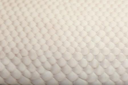 srokaty: Close-up kobiet Pied Pająk Królewskiego python skóry, Ball Python, Python regius, 18 miesięcy Zdjęcie Seryjne