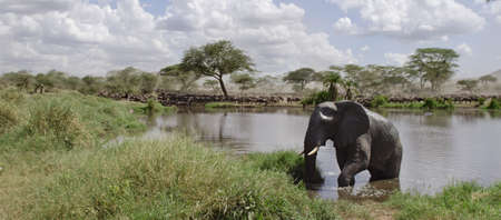 no swimming: Elephant in river in Serengeti National Park, Tanzania, Africa