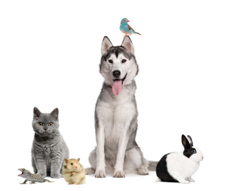medium group of people: Group of pets in front of white background