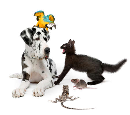 Group of pets in front of white background photo