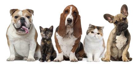 고양이와 흰색 배경 앞의 강아지의 그룹 스톡 콘텐츠