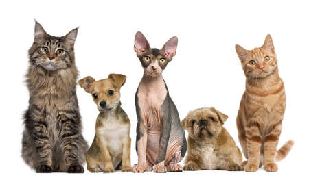 medium group: Group of cats and dogs in front of white background