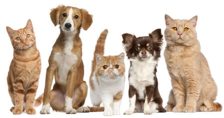 dog sitting: Group of cats and dogs in front of white background