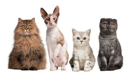 four species: Group of cats sitting in front of white background Stock Photo