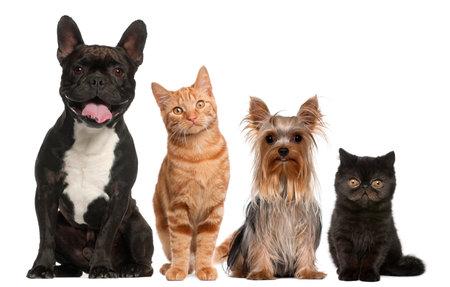 Groupe des chats et des chiens assis devant un fond blanc
