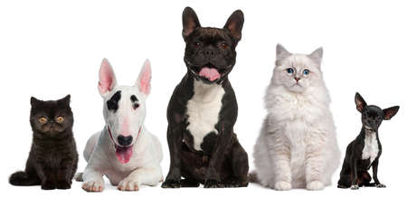 medium group: Group of cats and dogs sitting in front of white background
