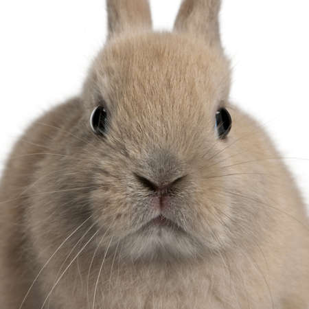 Close-up of young rabbit in front of white background photo