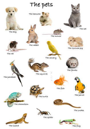 Collage of pets and animals in English in front of white background, studio shot photo