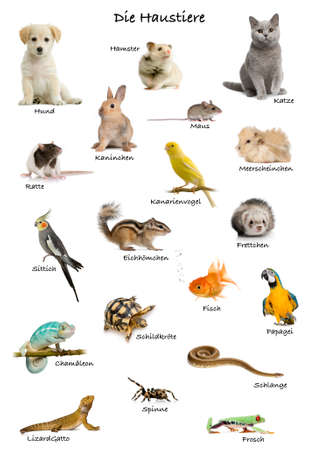 Collage of pets and animals in German in front of white background, studio shot photo