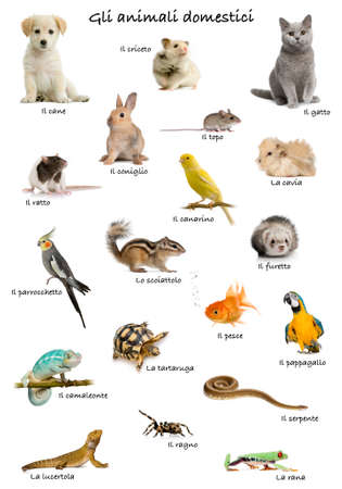 Collage of pets and animals in Italian in front of white background, studio shot photo