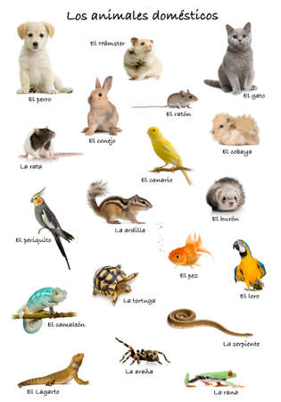 Collage of pets and animals in Spanish in front of white background, studio shot photo