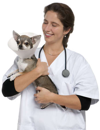 Vet carrying a Chihuahua wearing a space collar in front of white background photo