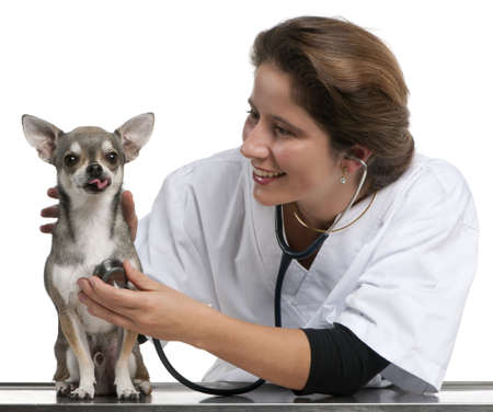 Vet examining a Chihuahua with a stethoscope in front of white background Stock Photo - 12668007