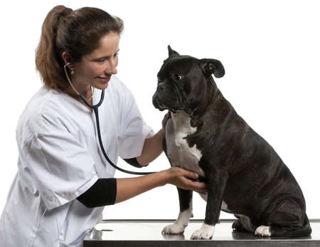 Vet examining a Crossbreed dog, dog with a stethoscope in front of white background photo