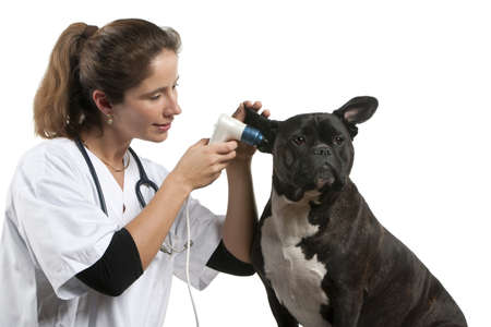 Vet examining a Crossbreed dog, dog with an otoscope in front of white background photo