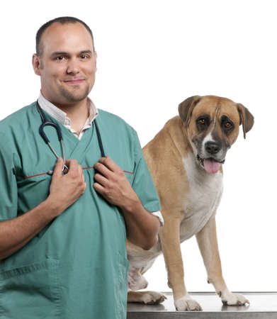 crossbreed: Vet standing next to a Crossbreed dog, dog in front of white background