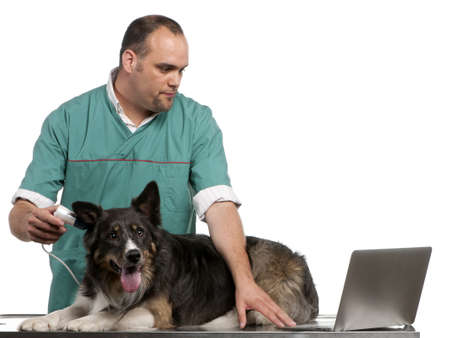 Vet examining a Border Collie with a digital otoscope in front of white background photo