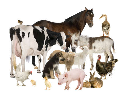 Group of Farm animals: horse, cow, pig, dog, hen, chick, rabbit, duck, turkey, donkey photo