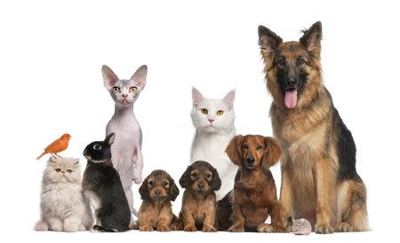 wit konijn: Groep huisdieren: hond, kat, vogel, konijn Stockfoto
