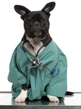 bata de laboratorio: Perro mestizo perro, vestido con un abrigo de doctor y que lleva un estetoscopio sobre un fondo blanco Foto de archivo