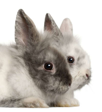 Portrait of rabbits in front of white background photo